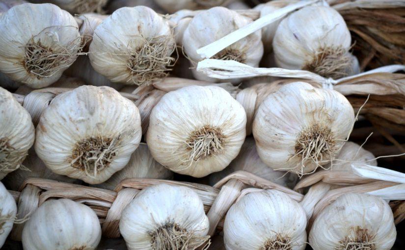 Odrůdy česneku
