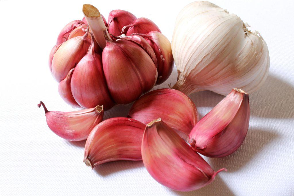 historie česneku